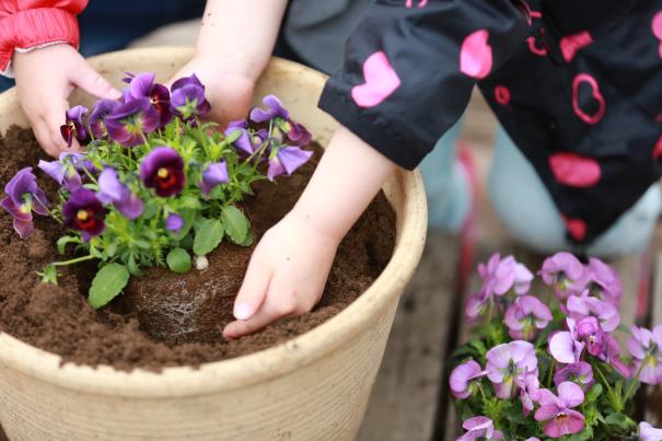 植木鉢に花を植える親子の手元の写真