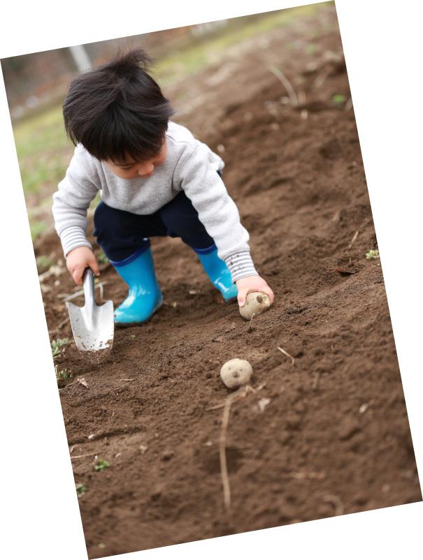 じゃがいもを植える子ども