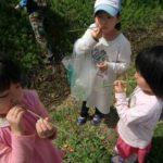 草笛をふく少女たち