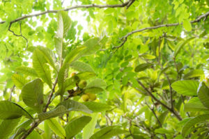 山崎山の木々アップ