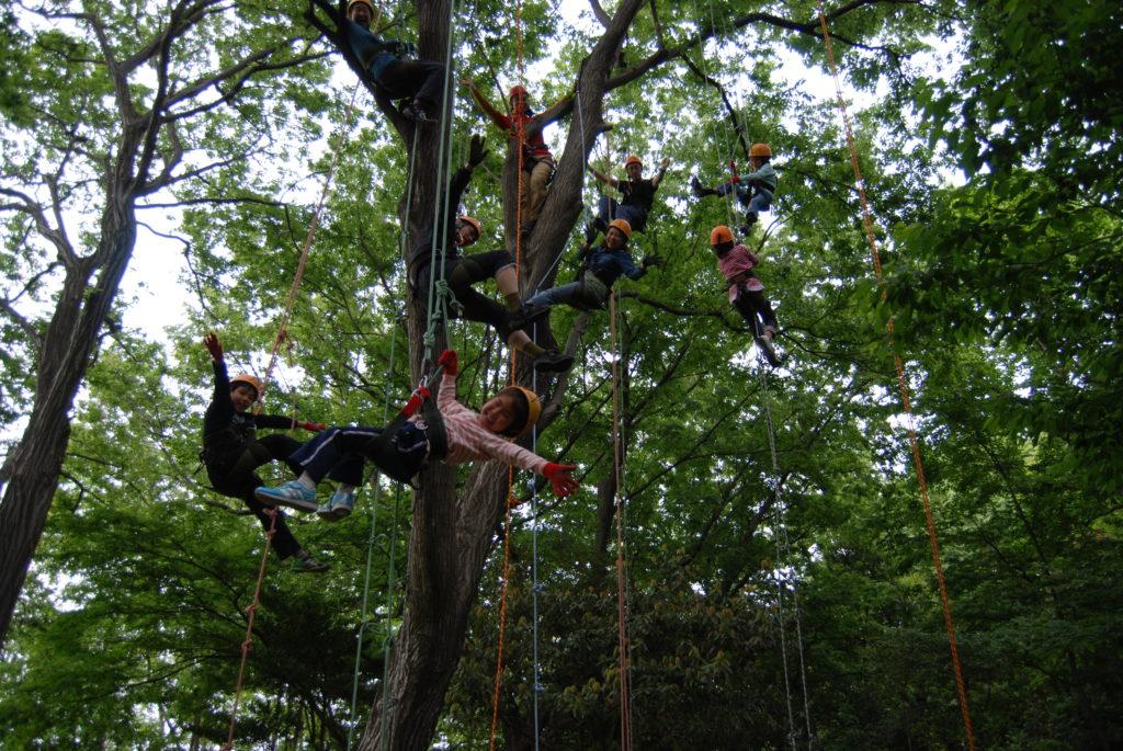木の上の記念写真