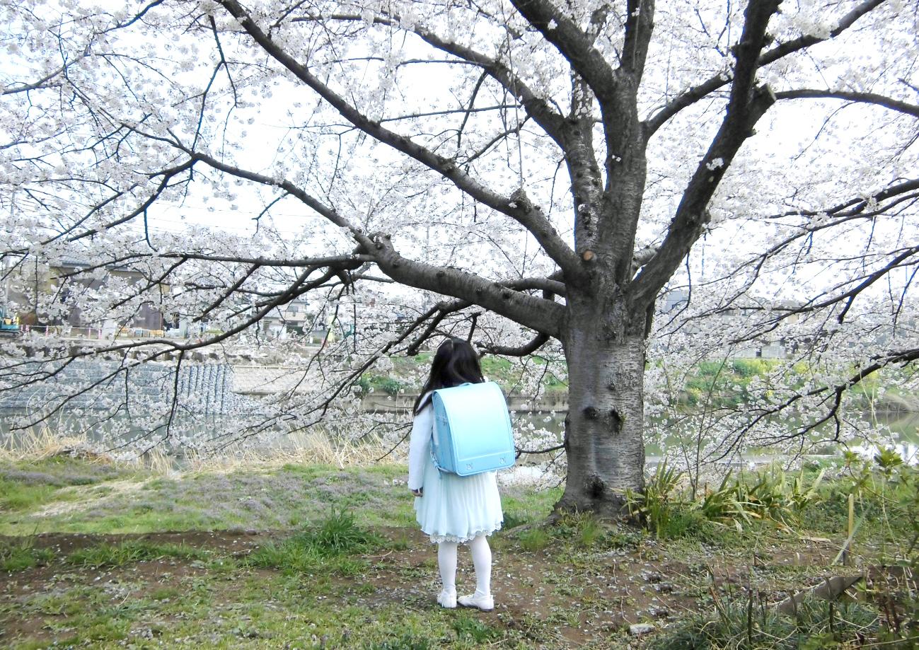 桜の下に立つ大きなランドセルを背負った女の子