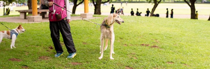 散歩する犬と一緒に