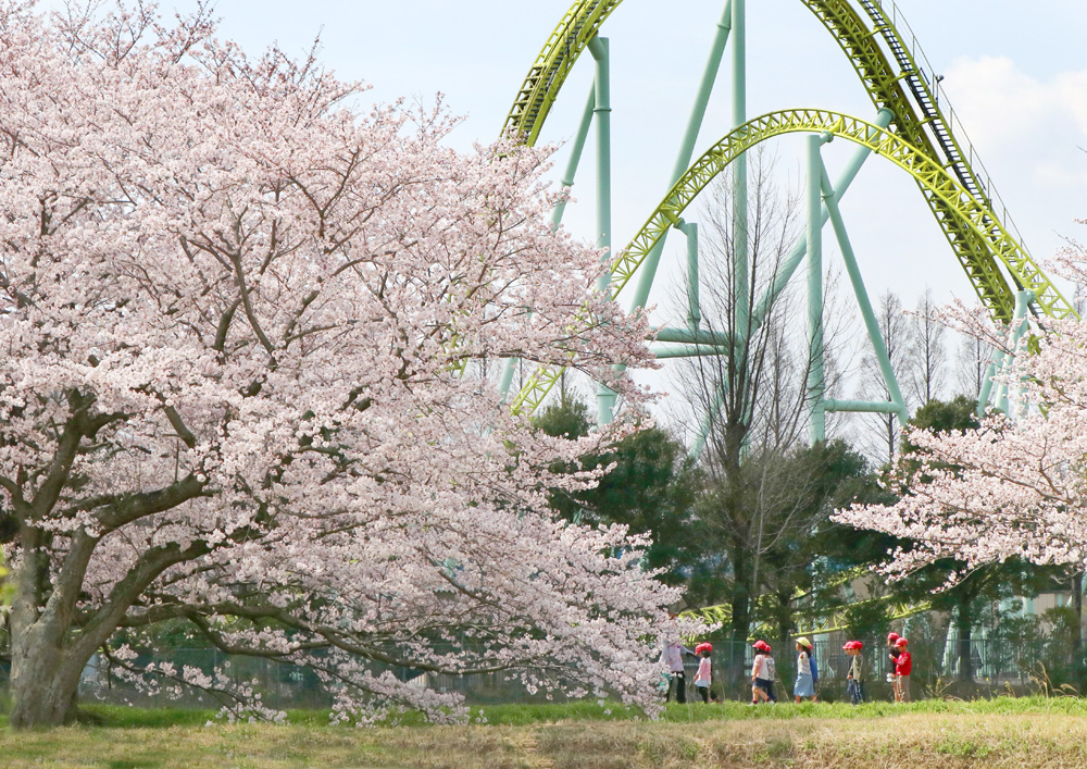 桜と子どもと東武動物公園