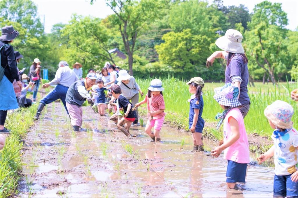 田んぼで田植えする子供たち