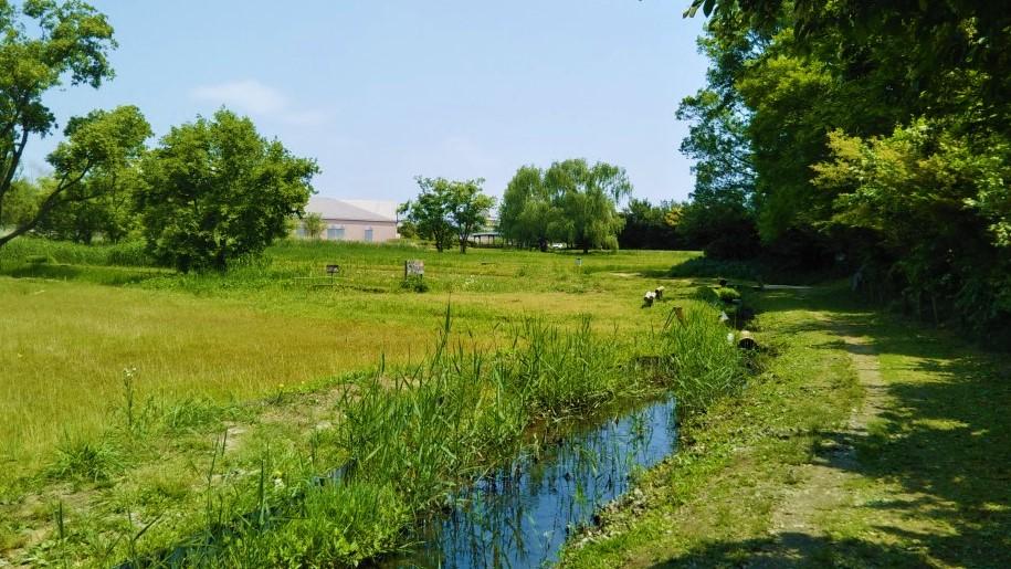 ほっつけ田んぼから図書館を望む風景