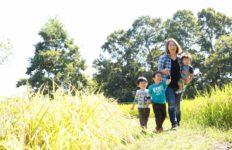 収穫前の田んぼを歩く親子