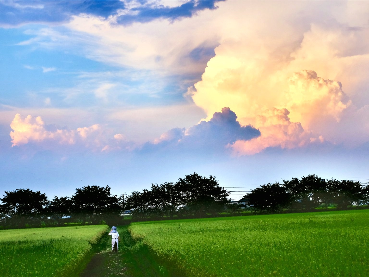 宮代の空と田園