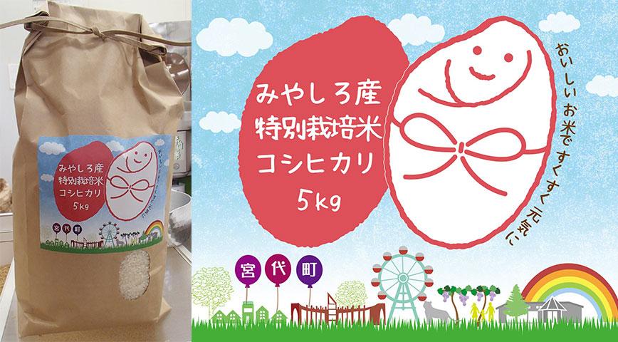 宮代産特別栽培米コシヒカリ