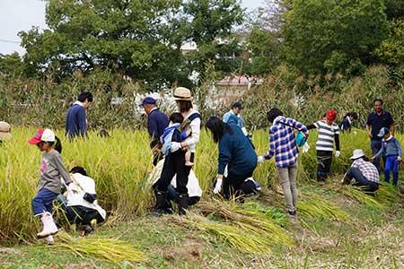 ほっつけ稲作体験
