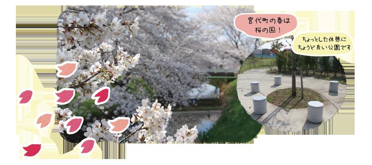 桜の道公園
